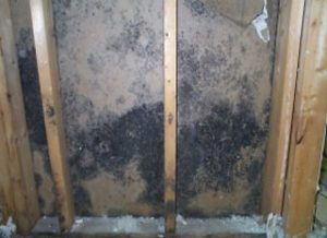 mold in the walls